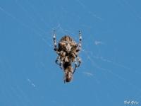 Spider capturing bee