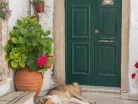 Dog in Vlacherna Monastery