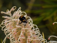 Bees in December
